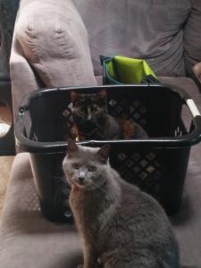 Mila Likes Baskets