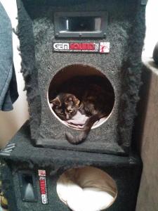 Mila in the Kitty Condo